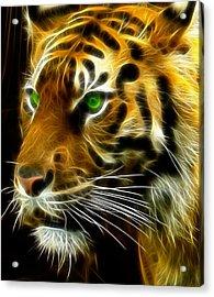 A Tiger's Stare Acrylic Print