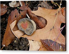 A Token Heart Acrylic Print by Shannon Guest