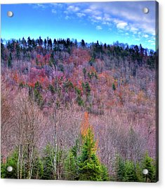 Acrylic Print featuring the photograph A Touch Of Autumn by David Patterson