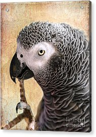 Acrylic Print featuring the photograph A Touch Of Grey 11 by Betty LaRue