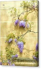 A Touch Of Lilac Acrylic Print by Tim Gainey