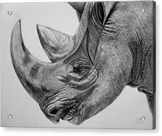 Rhinoceros - A Peaceful Giant Acrylic Print