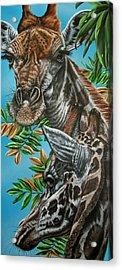 A Tower Of Giraffes Acrylic Print