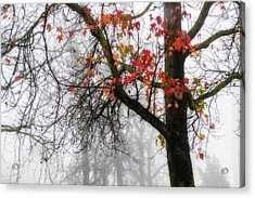 A Trace Of Autumn Acrylic Print by Terry Davis