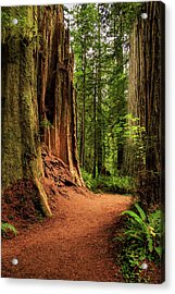 Acrylic Print featuring the photograph A Trail In The Redwoods by James Eddy