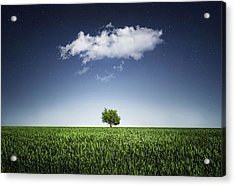 A Tree Covered With Cloud Acrylic Print by Bess Hamiti