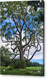Acrylic Print featuring the photograph A Tree In Paradise by DJ Florek