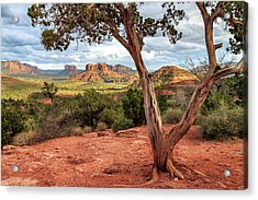 Acrylic Print featuring the photograph A Tree In Sedona by James Eddy