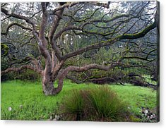 Acrylic Print featuring the photograph A Tree In The Park  by Catherine Lau