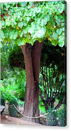 Acrylic Print featuring the photograph A Tree Lovelier Than A Poem by Madeline Ellis