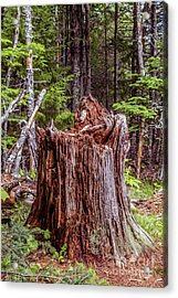 A Tree's Life Acrylic Print by Claudia M Photography