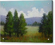 A Tree's View Acrylic Print by Paula Ann Ford