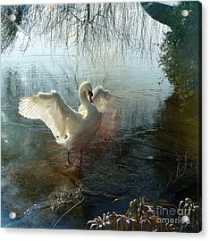Acrylic Print featuring the photograph A Very Fine Swan Indeed by LemonArt Photography