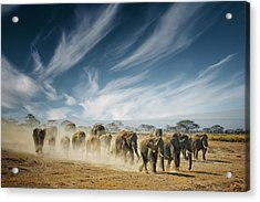 A Very Long Thinking Acrylic Print by Mathilde Guillemot