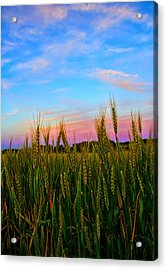 A View From Crop Level Acrylic Print by Bill Tiepelman