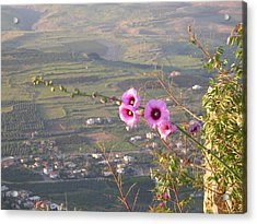 A View From Mt. Arbel Acrylic Print by Susan Heller