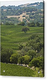 A Vineyard In The Anderson Valley Acrylic Print by Richard Nowitz