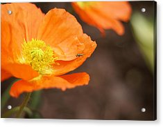 Acrylic Print featuring the photograph A Visitor by Heidi Poulin
