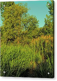 A Walk Amongst The Reeds Acrylic Print