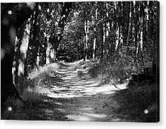 A Walk In The Woods Acrylic Print by Edward Myers