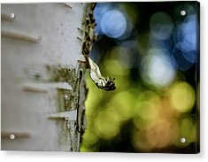 A Walk In The Woods Is Good For The Soul Acrylic Print
