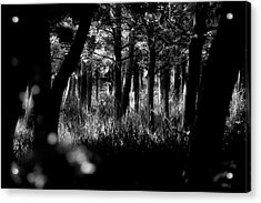 Acrylic Print featuring the photograph A Walk In The Woods by Jeremy Lavender Photography