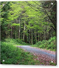 A Walk In The Woods Acrylic Print by Tom  Doherty