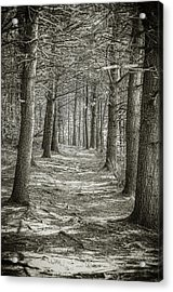 A Walk In Walden Woods Acrylic Print