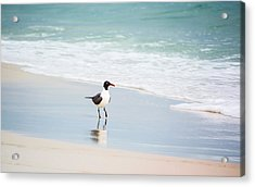 A Walk On The Beach Acrylic Print by Shelby  Young