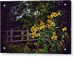 Acrylic Print featuring the photograph A Walk With Wildflowers by Jessica Brawley