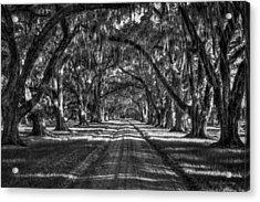 The Majestic Way Live Oaks Tomalley Plantation South Carolina Acrylic Print