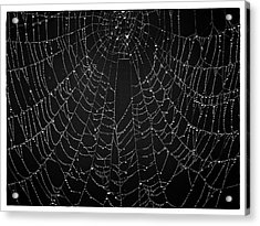 A Web Of Silver Pearls Acrylic Print