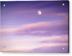 A White Moon In Twilight Acrylic Print by Ellie Teramoto