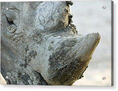 A White Rhino At The Henry Doorly Zoo Acrylic Print