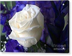 A White Rose Acrylic Print by Sharon Talson