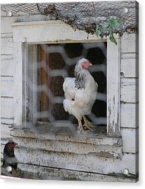A Window In The Coop Acrylic Print by Janis Beauchamp