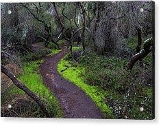 A Windy Path Acrylic Print