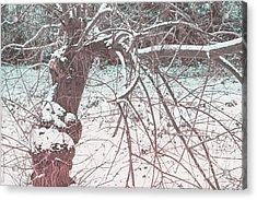 A Winter Tree Acrylic Print