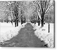 A Winter's Path Acrylic Print by Rae Tucker
