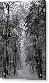 A Winters Path Acrylic Print