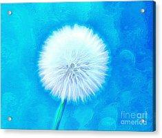 A Wish For You Acrylic Print by Krissy Katsimbras
