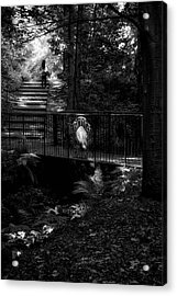 Acrylic Print featuring the photograph A Woman Walking Her Dog At Pittencrieff Park by Jeremy Lavender Photography