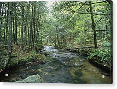 A Woodland View With A Rushing Brook Acrylic Print by Heather Perry