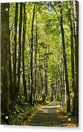 A Woodsy Trail Acrylic Print
