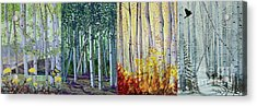 A Year In A Birch Forest Acrylic Print