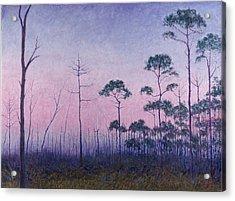 Abaco Pines At Dusk Acrylic Print