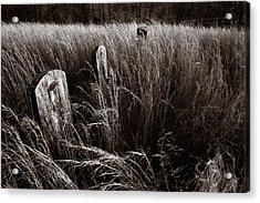 Abandoned Cemetery Midwest Acrylic Print by Steve Gadomski