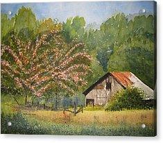 Abandoned Mimosas Acrylic Print