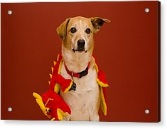 Abbie And Dragon Toy Acrylic Print