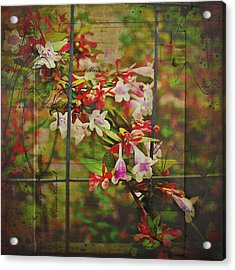 Abelia Coming Through Acrylic Print